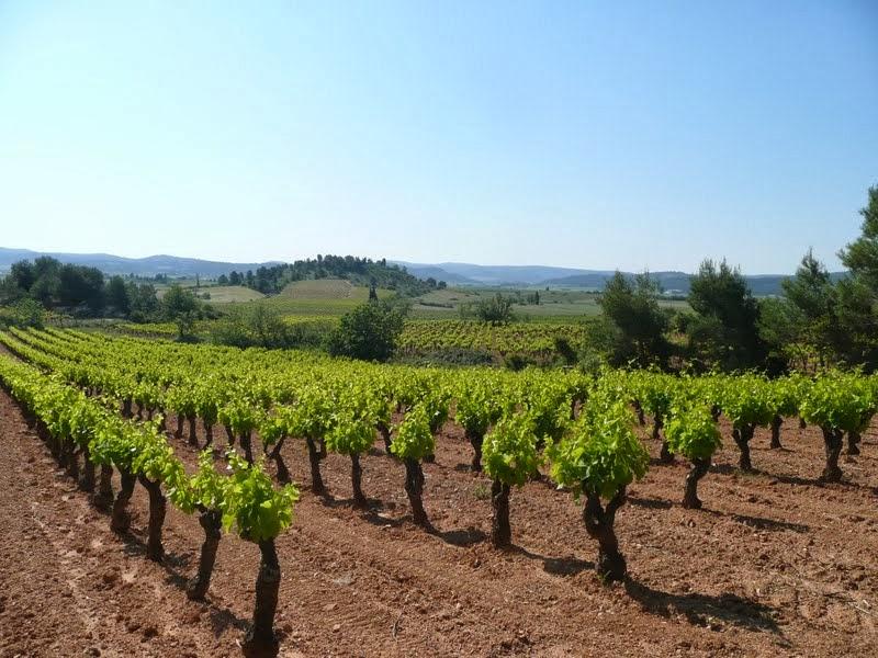 Le vignoble des Corbières