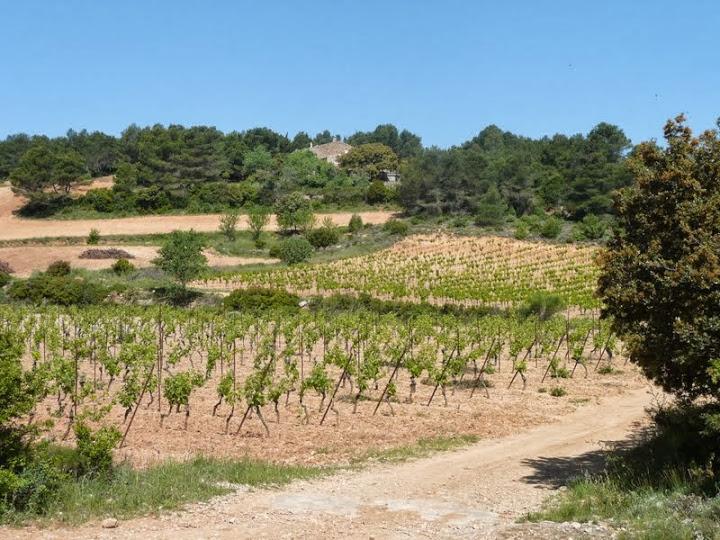 Chemin en bordure de vigne