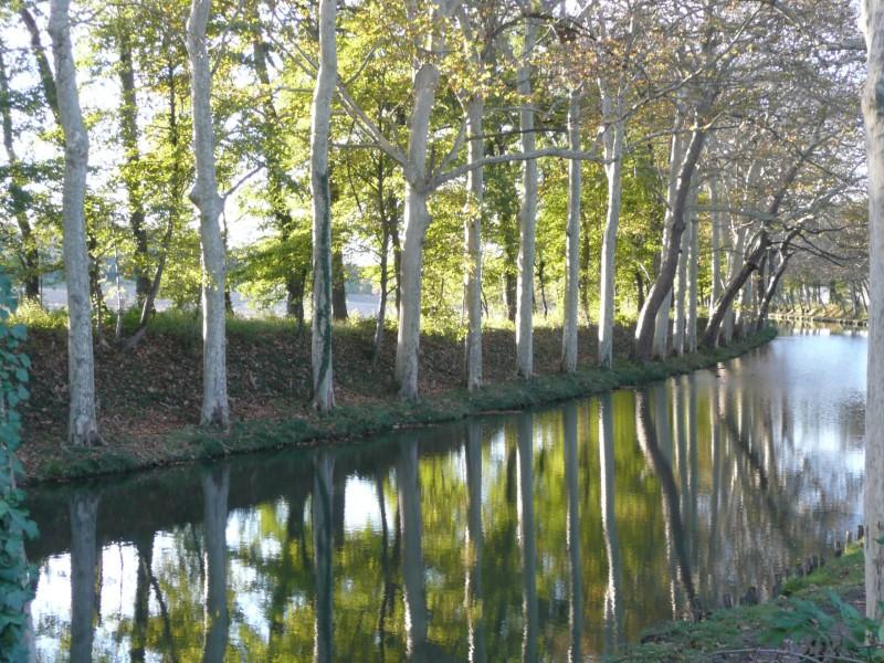 Reflets du Canal du Midi